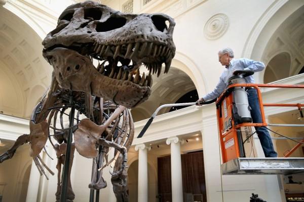 dinosaur13b